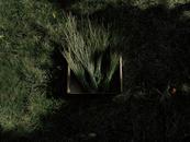 Tall Grass Bundles Tied