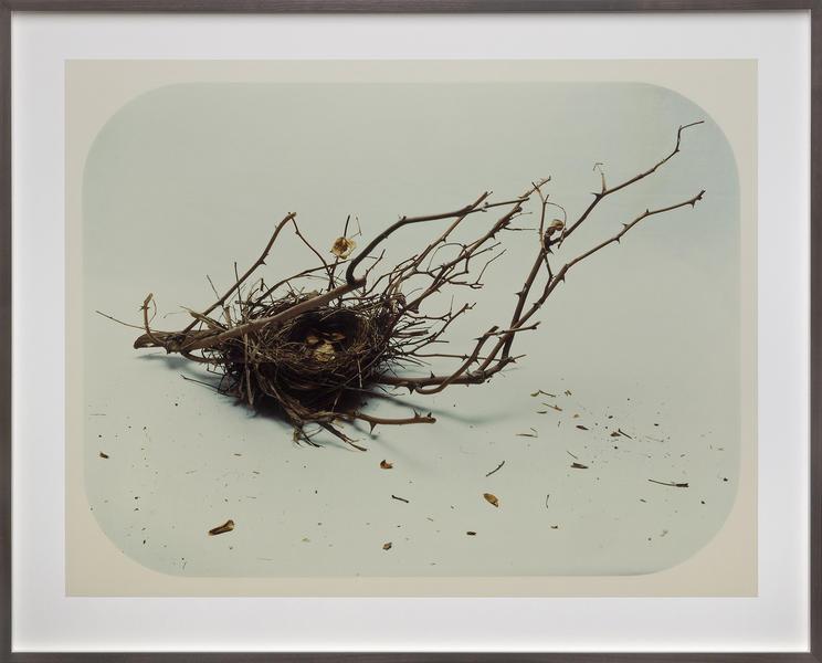 Nest, No. 1
