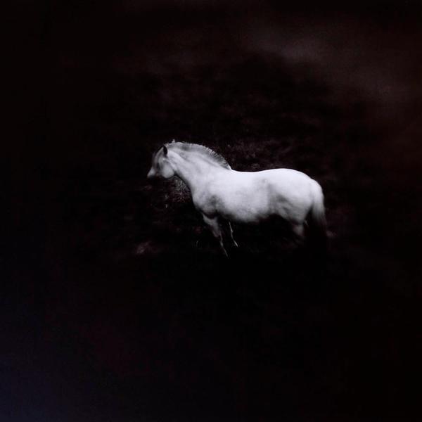 Norwegian Pony #1
