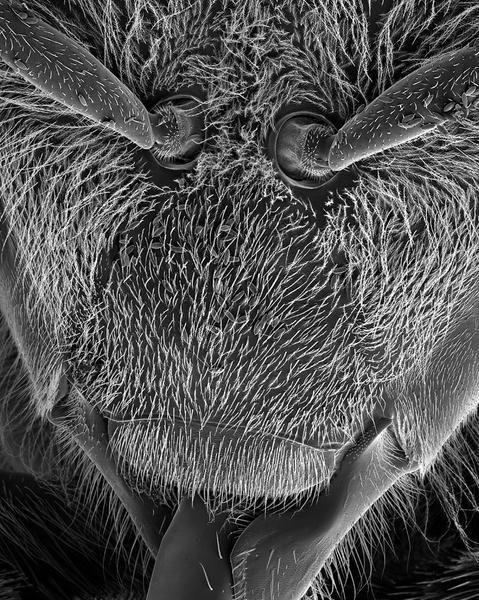 Bee Antenna Sockets 43x