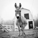 Dee Dee, Resident of Star Gazing Farm