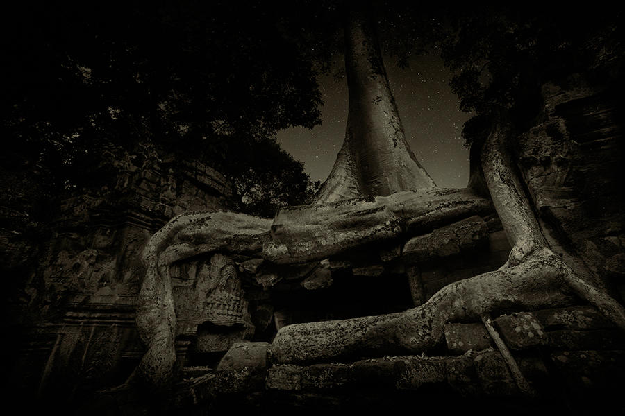 Ta prohm Temple 4, Cambodia