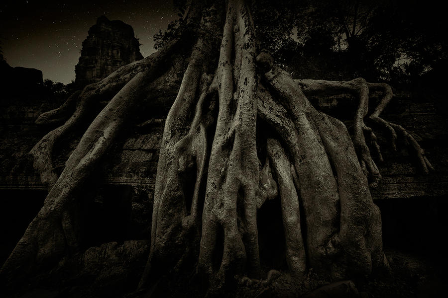 Ta Prohm Temple 5, Cambodia