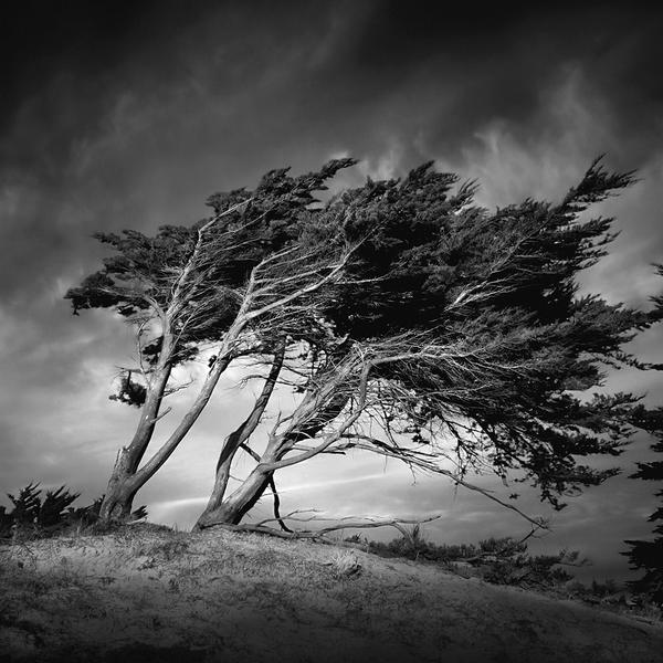 Wind & Wuthering I