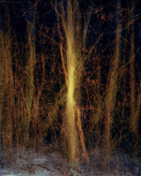 Multiples, Forest, 2006
