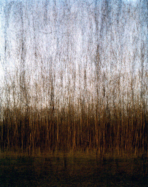 Multiples, Forest, 2007