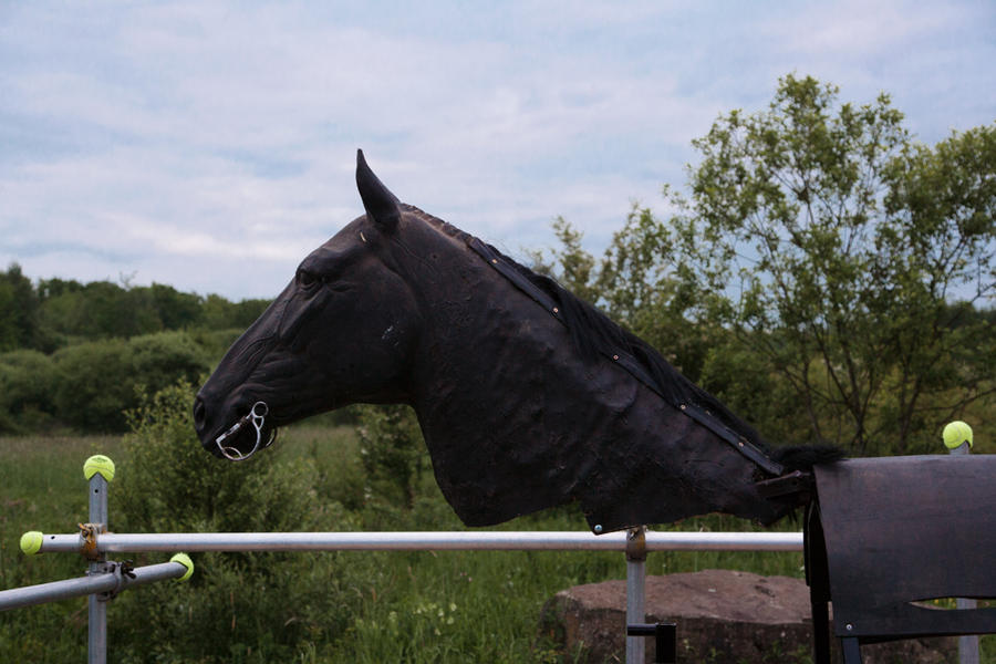 Horse with no name on the movie set