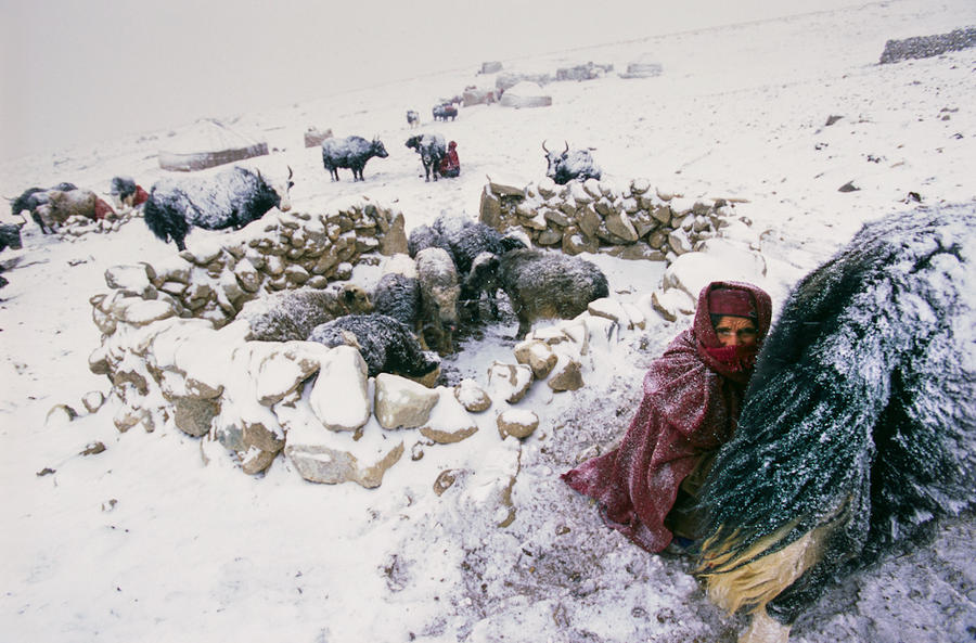 A Wakhi woman milks yaks, Afghan Pamirs