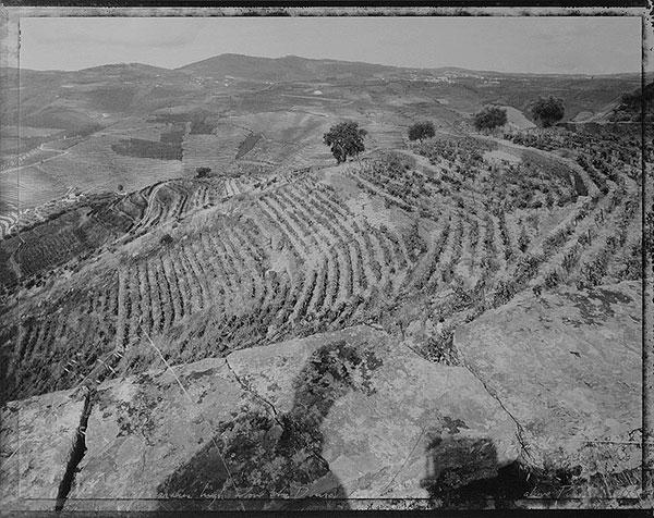 Looking at Terraces High Above the Douro Above Pinhão, 1995