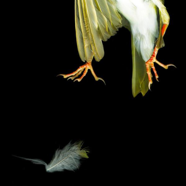 Sparrow Feet 2