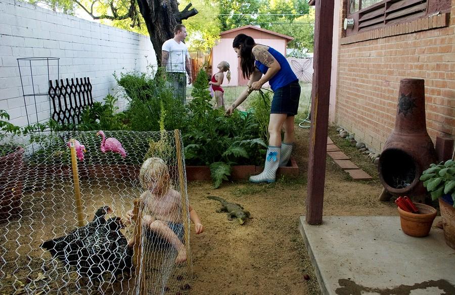 Down on the Backyard Urban Farm