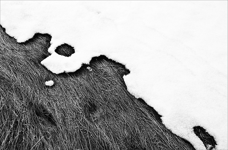 Grass and Snow 1, 2011.