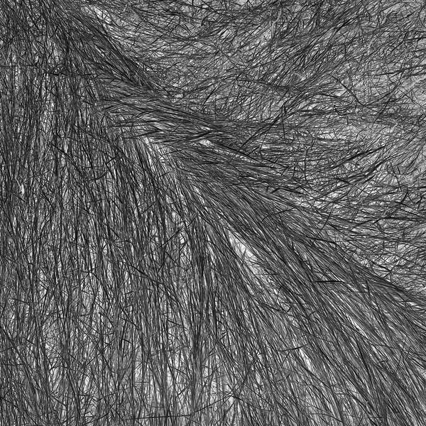 Grass Tracks 14, 2011.