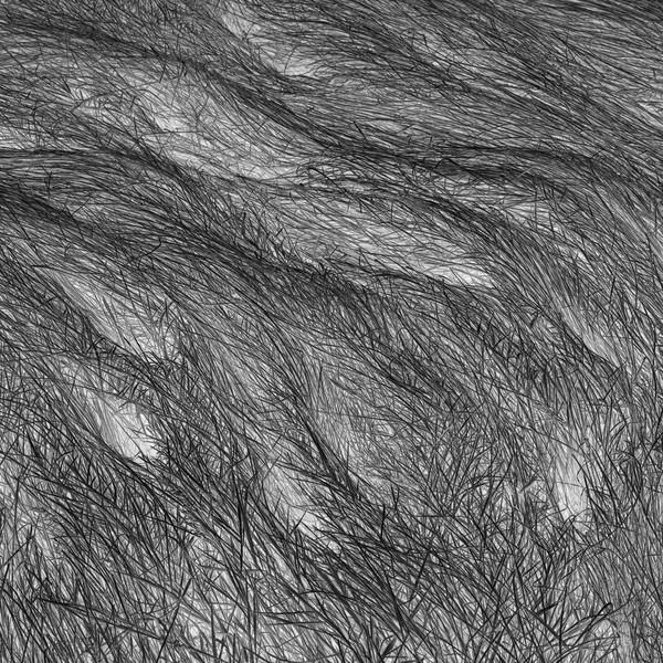 Grass Tracks 35, 2011.