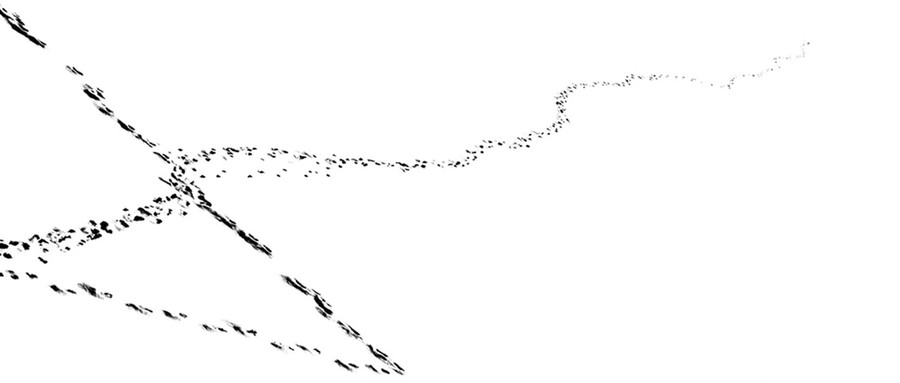 Snow Tracks 13, 2012.