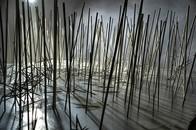 BBQ Stick Forest