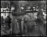 Burned Cypress, 2011