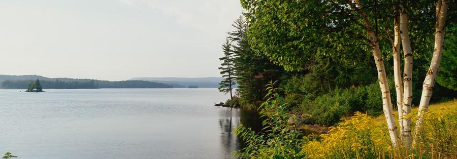 Adirondack Birches