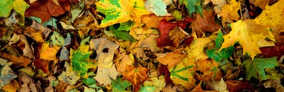 Fallen Leaves, Broome County