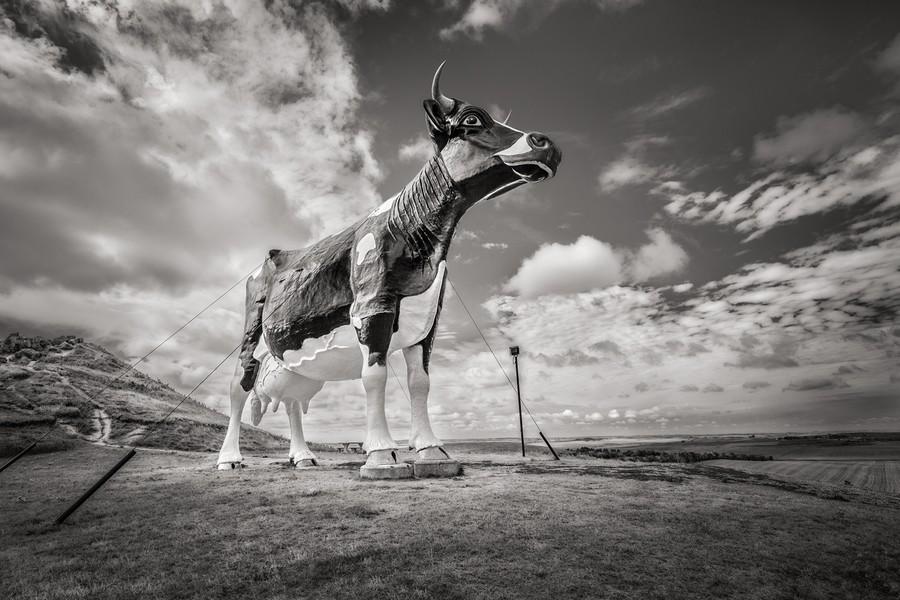 World's Largest Holstein Cow, New Salem, ND