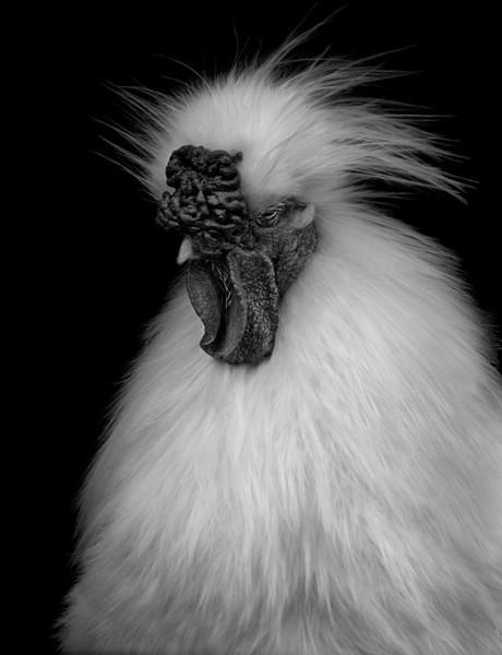 Animal (229), 2013.