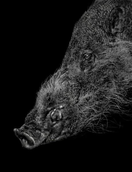 Animal (231), 2013.