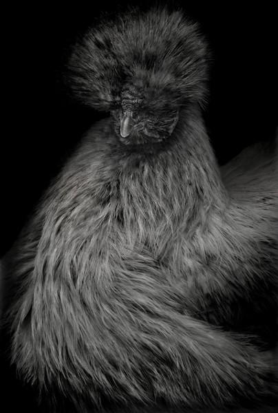 Animal (252), 2013.