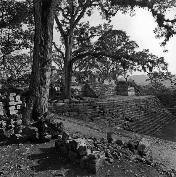'Copan', Honduras, 1988